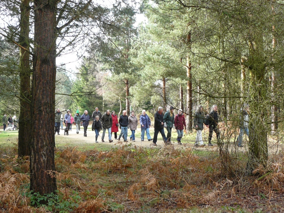 Ramblers through the trees
