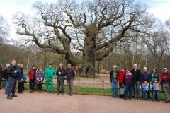 Two icons of the woods: The annual SSF Ramblers and the Major Oak