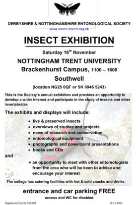 Insect Exhibition Poster